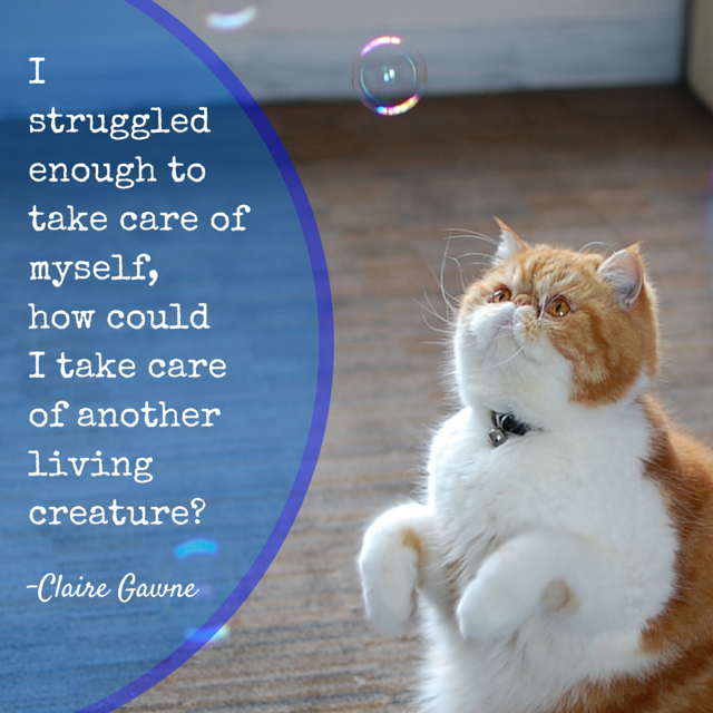 "a picture of Gremlin the cat trying to catch bubbles, with quote text ""I struggled enough to take care of myself, how could I take care of another living creature?"" -Claire Barnier"